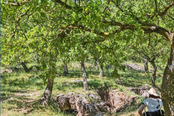 armeni3